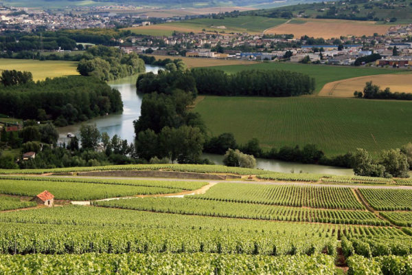 One day excursion in Champagne